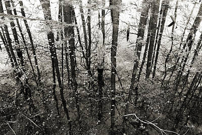 Swamp Reflections Poster by Scott Pellegrin