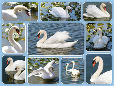 Swan Collage In Blue Poster by Carol Groenen