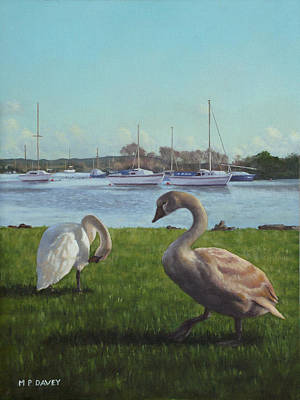 swans at Christchurch harbour Poster by Martin Davey