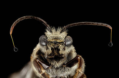 Sweat Bee Poster by Us Geological Survey