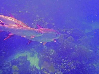 Tarpon Reef Poster by Carey Chen