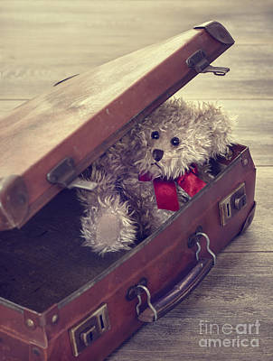 Teddy Bear In Suitcase Poster by Amanda Elwell