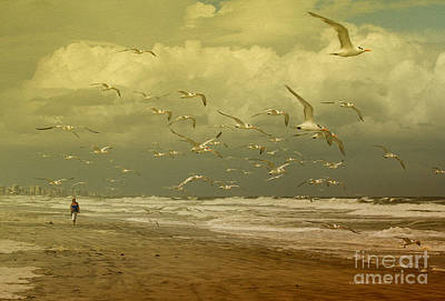 Terns In The Clouds Poster by Deborah Benoit