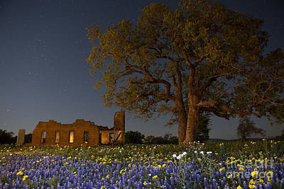 Texas Blue Bonnets At Night Poster by Keith Kapple