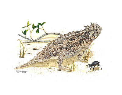 Texas Horned Lizard Poster by Cindy Hitchcock