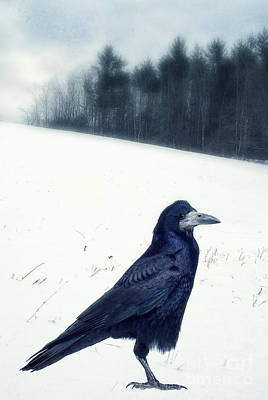 Birdwatching Poster featuring the photograph The Black Crow Knows by Edward Fielding