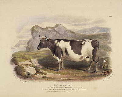 The Clydeside Breed Poster by British Library