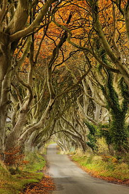 The Dark Hedges 2 Poster by Frank  Koenig