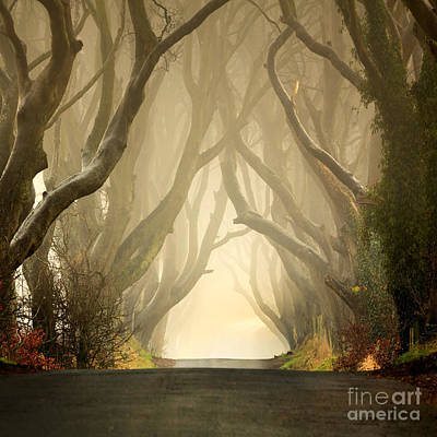 The Dark Hedges 2011 Poster by Pawel Klarecki