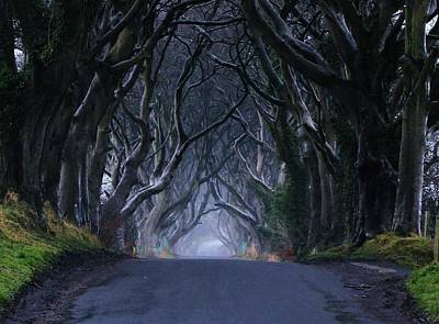 The Dark Hedges Poster by Anne Kelly
