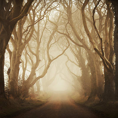 The Dark Hedges Poster by Maggy Morrissey