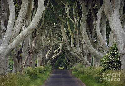The Dark Hedges, Northern Ireland Poster by John Shaw