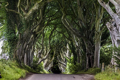 The Dark Hedges Poster by Wonderful Ireland
