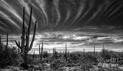 The Desert In Black And White Poster by Saija  Lehtonen