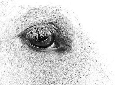 The Eye Of The Horse Black And White Poster by Jennie Marie Schell