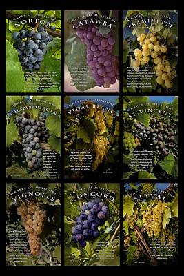 The Grapes Of Missouri Poster by Tony Carosella