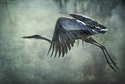 The Great Blue Heron  Poster by Saija  Lehtonen