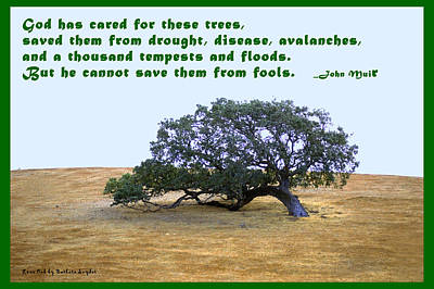 The Last Tree John Muir Quote Poster by Barbara Snyder