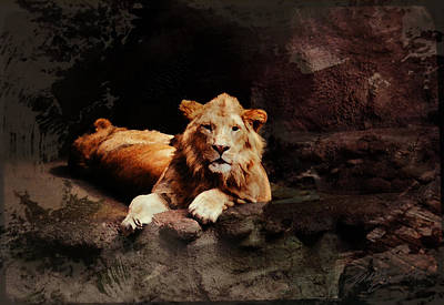 The Lion And The Lioness Poster by Maria Eames