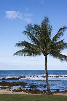 The Perfect Palm Tree - Sunset Beach Oahu Hawaii Poster by Brian Harig
