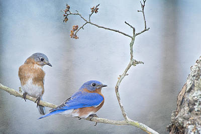 The Presence Of Bluebirds Poster by Bonnie Barry