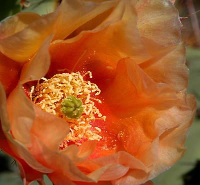 The Prickly Pear World Poster by Joe Kozlowski