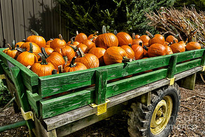 The Pumpkin Cart Poster by Mark Miller