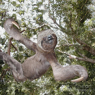 The Sloth  A Real Tree Hugger Poster by Bruce Stanfield