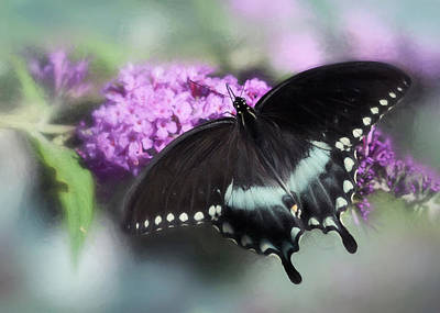 The Swallowtail Poster by Lori Deiter