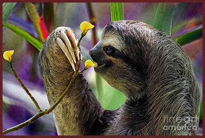The Three-toed Sloth Poster by Gary Keesler