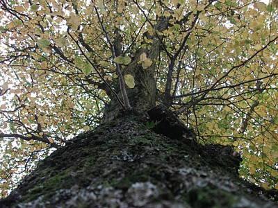 The Tree Poster by Tony Stark