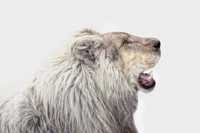 The White Lion Poster by Joachim G Pinkawa