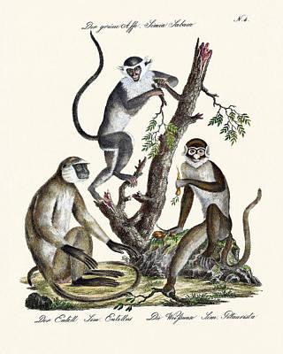 The White-nosed Monkey Poster by Splendid Art Prints