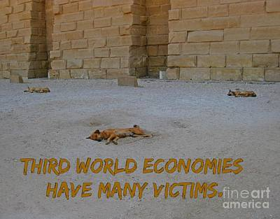 Third World Dogs Poster by John Malone