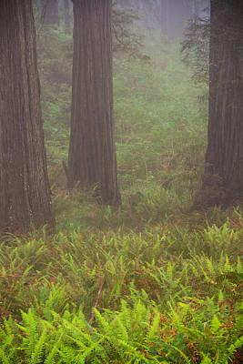 Three Foggy Muskeeters Poster by Kunal Mehra