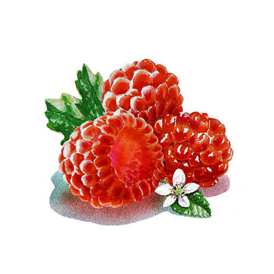 Three Happy Raspberries Poster by Irina Sztukowski
