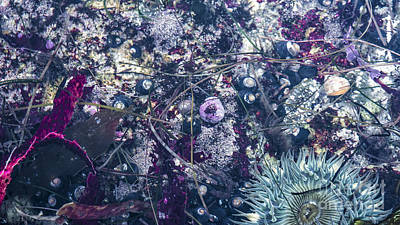 Tidal Pool Assortment Poster by Terry Rowe