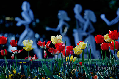 Tip Toe Through The Tulips Poster by Cheryl Young