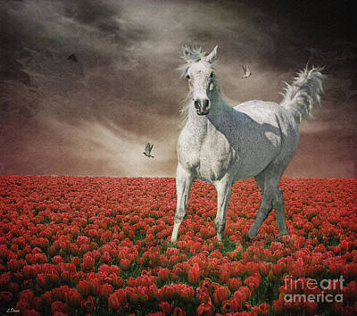 Tiptoe Through The Tulips Poster by Wobblymol Davis
