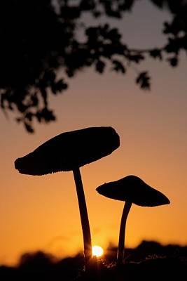 Toadstools At Sunset Poster by Dr. John Brackenbury