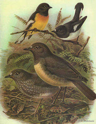 Tomtit And Robin Poster by J G Keulemans