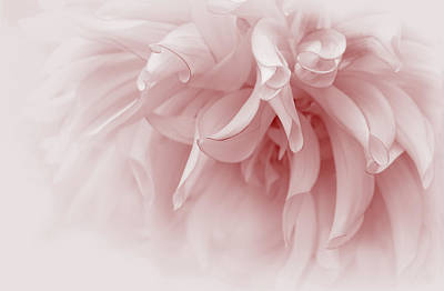 Touch Of Pink Dahlia Flower Poster by Jennie Marie Schell
