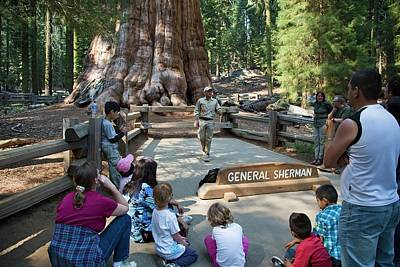 Tourists Visiting General Sherman Tree Poster by Jim West
