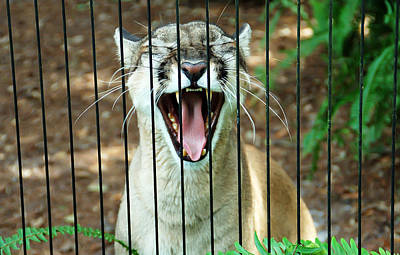 Trapped In A Cage Poster by Aimee L Maher Photography and Art Visit ALMGallerydotcom