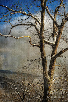 Tree In Winter Poster by Lois Bryan