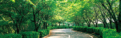 Tree Lined Road Osaka Shijonawate Japan Poster by Panoramic Images