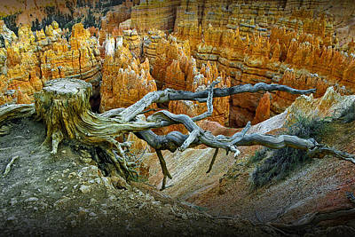 Tree Stump On A Ridge In Bryce National Canyon Poster by Randall Nyhof