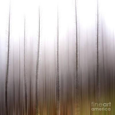 Tree Trunks Poster by Bernard Jaubert
