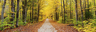 Trees Along A Pathway In Autumn Poster by Panoramic Images