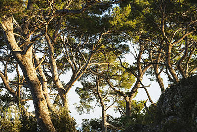 Trees And Blue Sky_ Portofino, Liguria Poster by Yves Marcoux